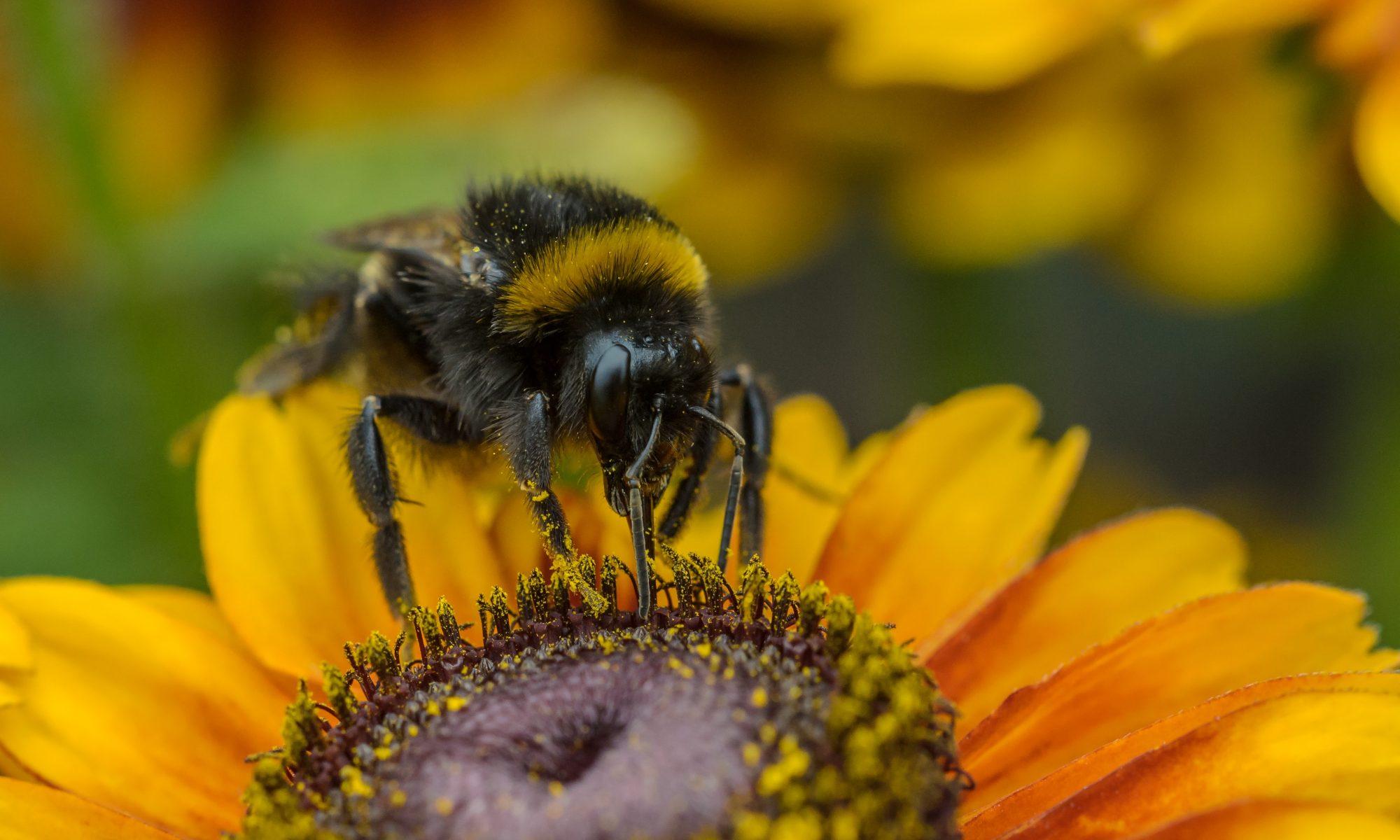 Bees Please